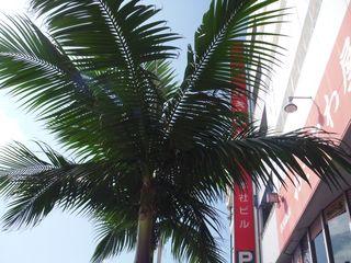 2009_1119沖縄出張0020